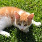 Katze, Babykatze, Schule am Bauernhof
